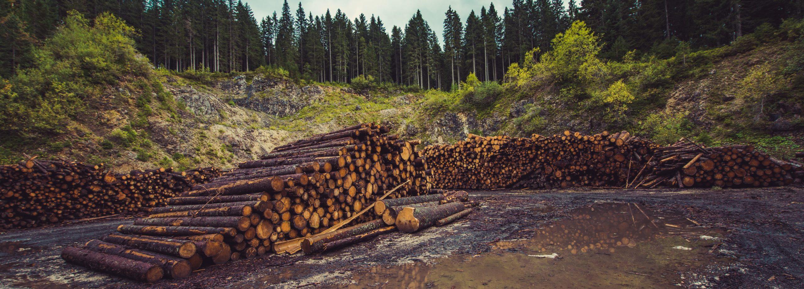 Nachhaltig und Naturnah